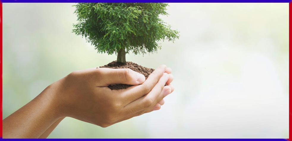 proteccion-medio-ambiente